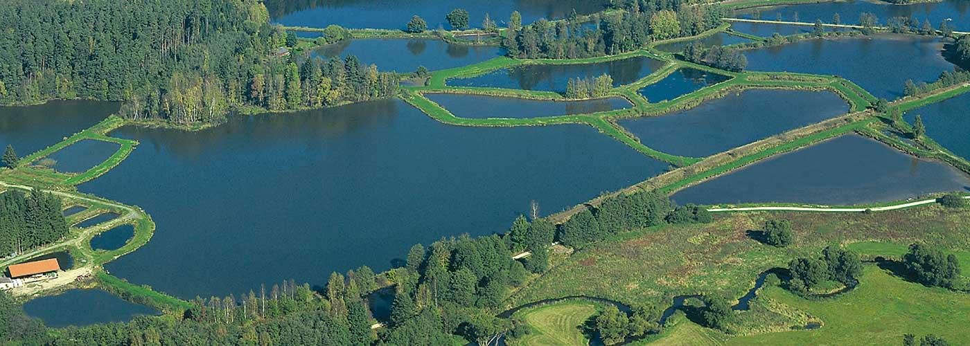 Teichgebiet Waldnaabaue