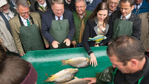 Bayerische Karpfensaison in Muckenthal eröffnet